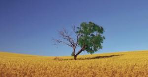 Aan de vruchten herken je de boom